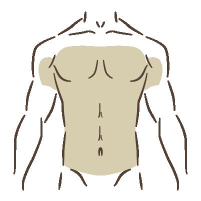 胸元全体・腹部全体・両わき